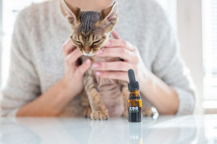 "small glass bottle with dropper marked ""CBD Drops"" in foreground with an anonymous pet owner holding a cat in the background"