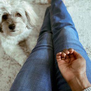 Dog Waits Beside Owner for CBD Treat
