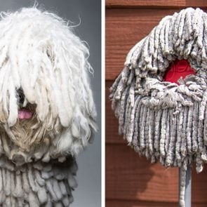 a portrait of a dog compared to a portrait of a mop