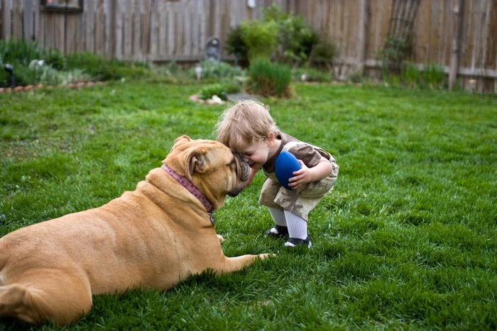 Toddler headbutts patient dog