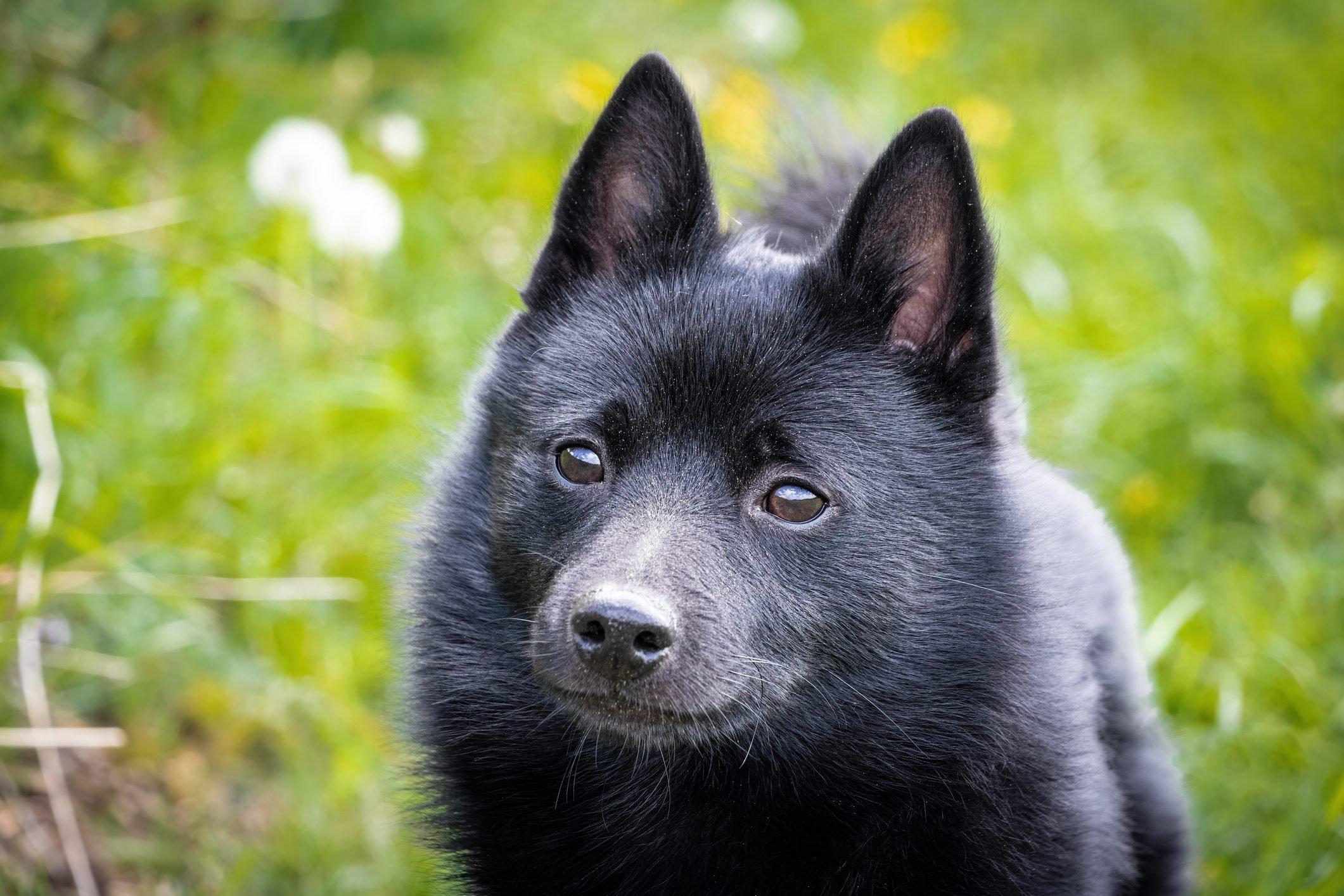 Black puppy dog on grass