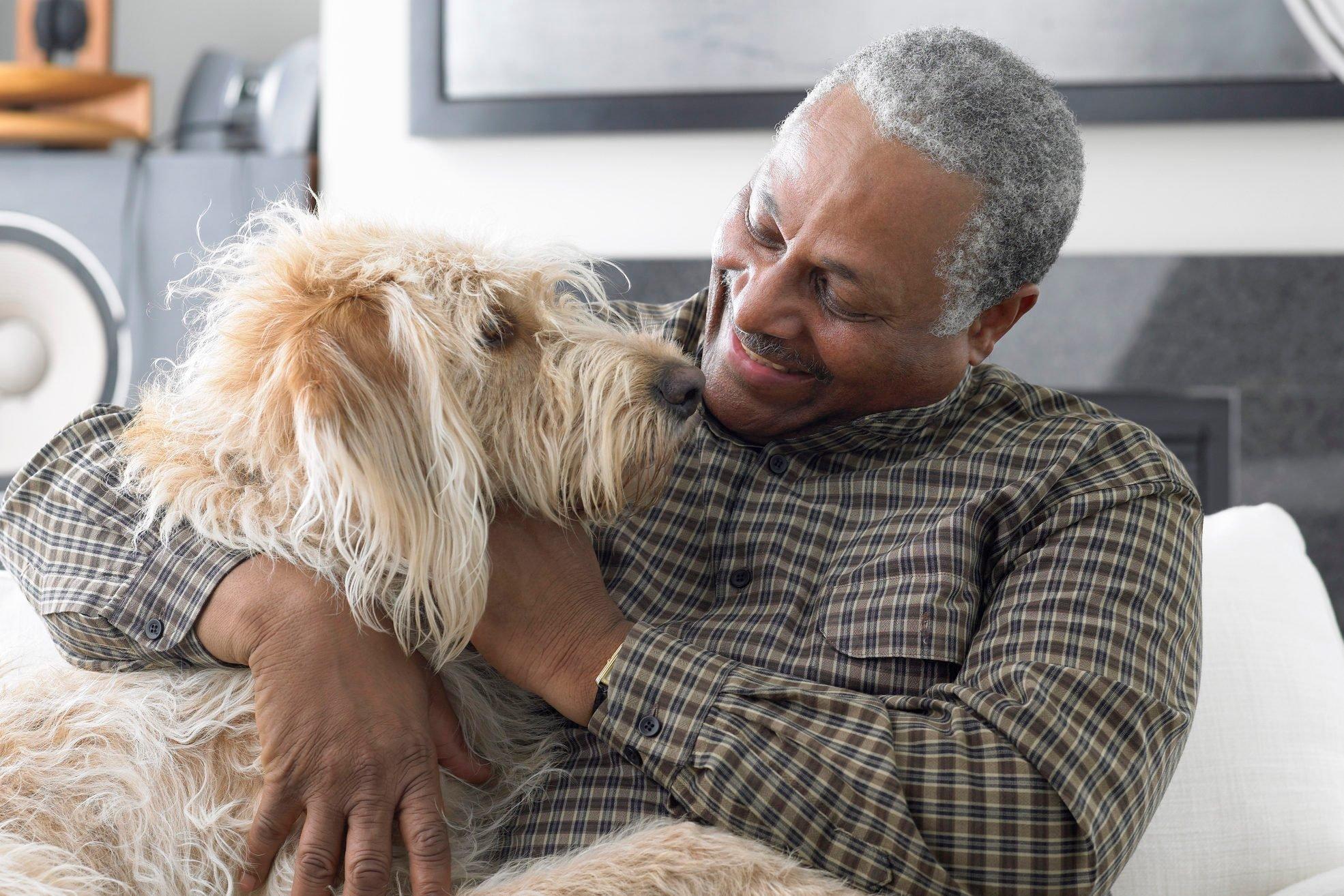 Senior man sitting on sofa, playing with dog, close-up