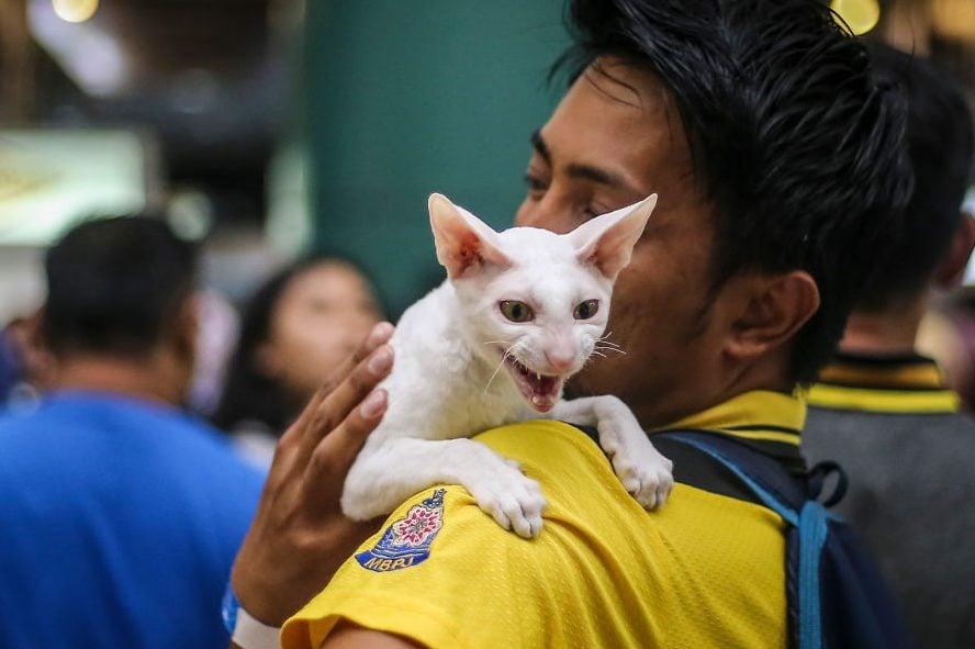 Malaysia Cat Expo 2017