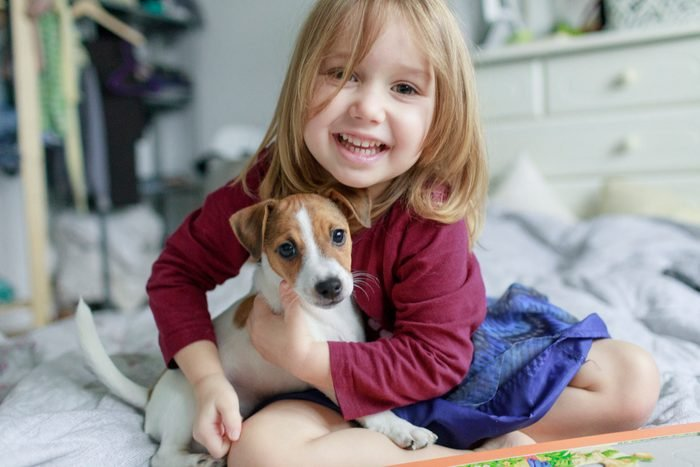 Portrait of happy little girl crouching on bed with Jack Russel Terrier puppy