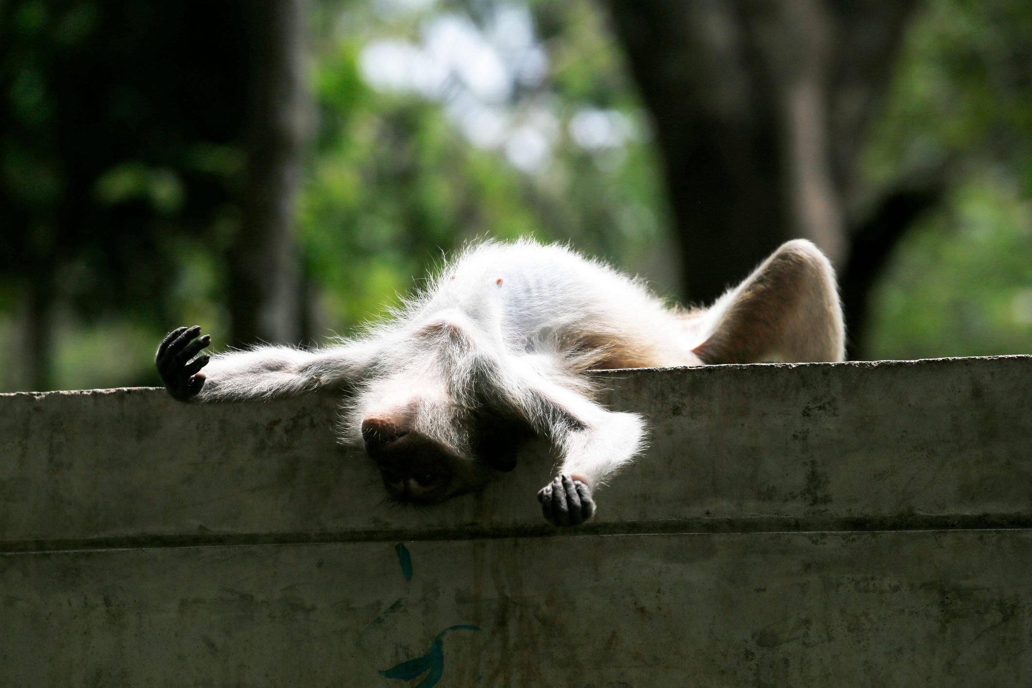 Low Angle View Of Monkey On Wall