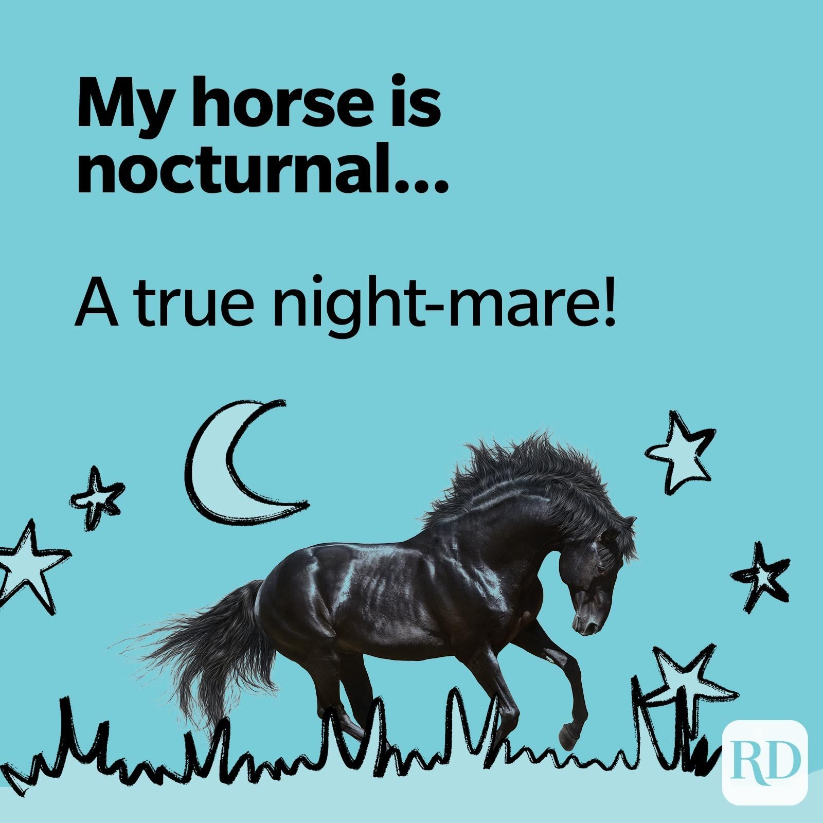 My horse is nocturnal… A true night-mare!