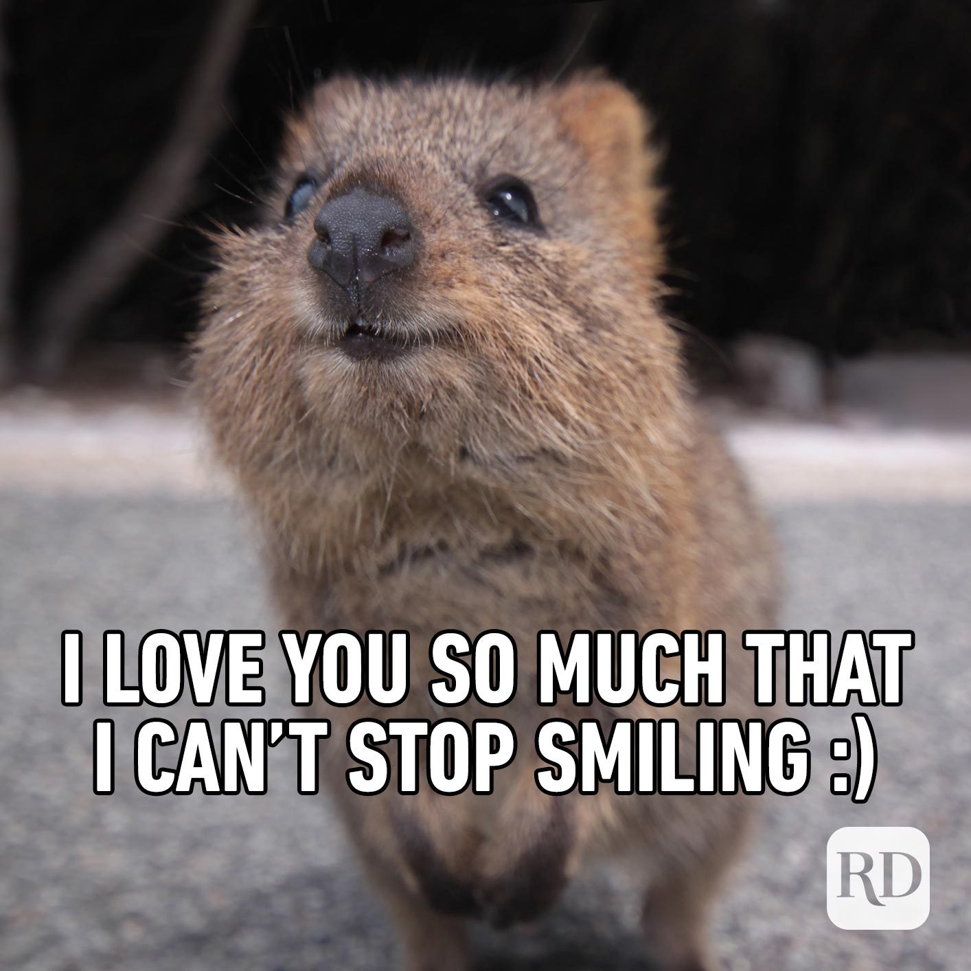 Happy rodent. Meme text: I love you so much that I can't stop smiling :)