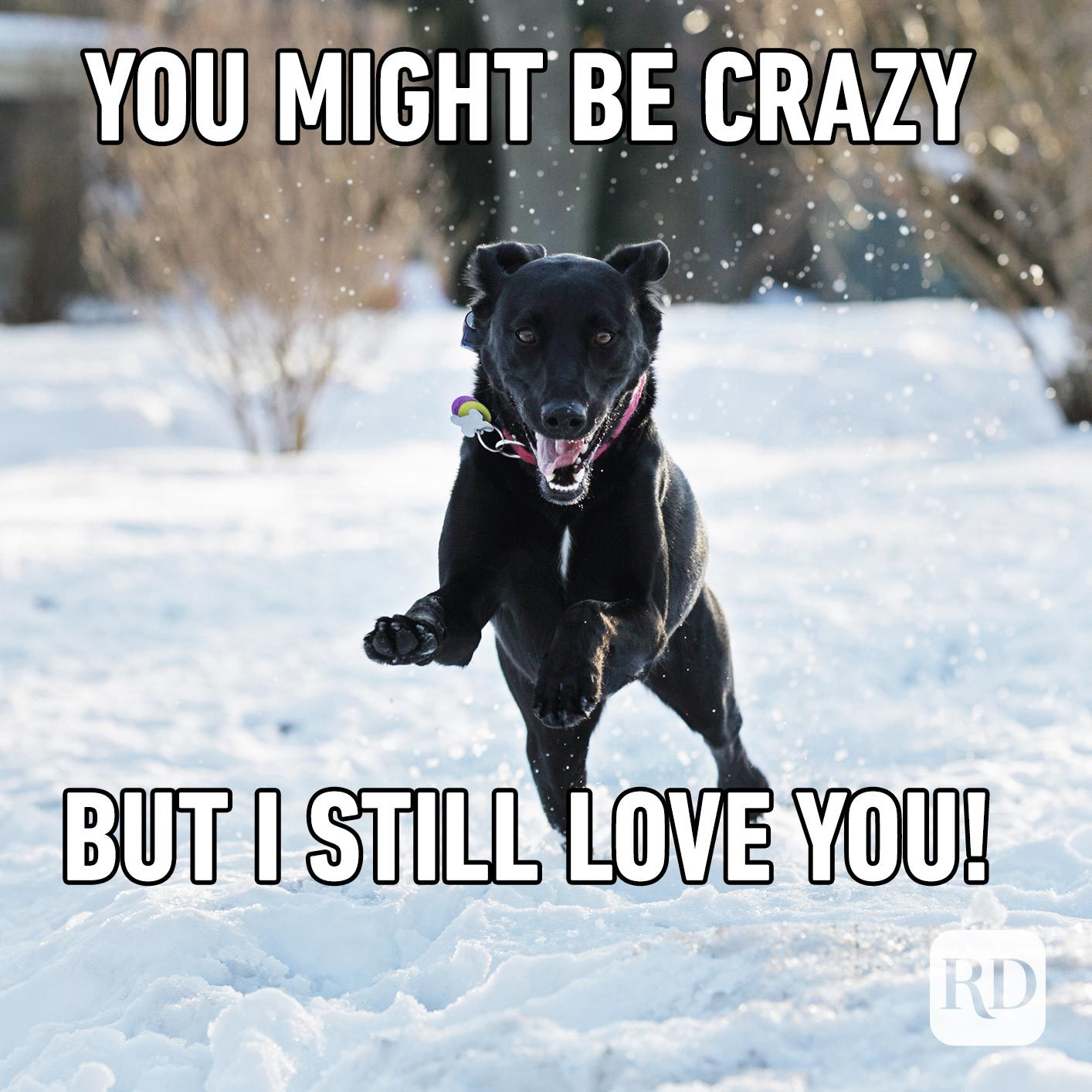Dog leaping over snow. Meme text: You might be crazy, but I still love you!