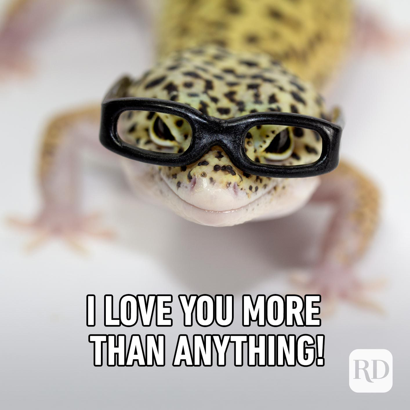 Gecko wearing glasses. Meme text: I love you more than anything!