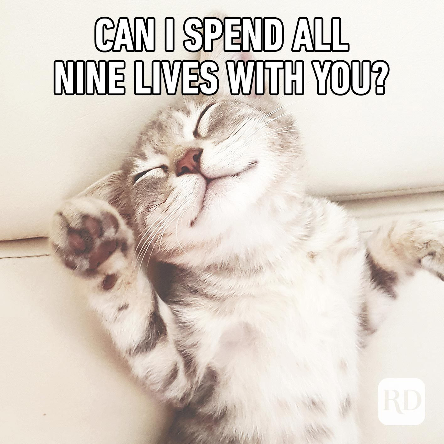 Sleeping cat. Meme text: Can I spend all nine lives with you?