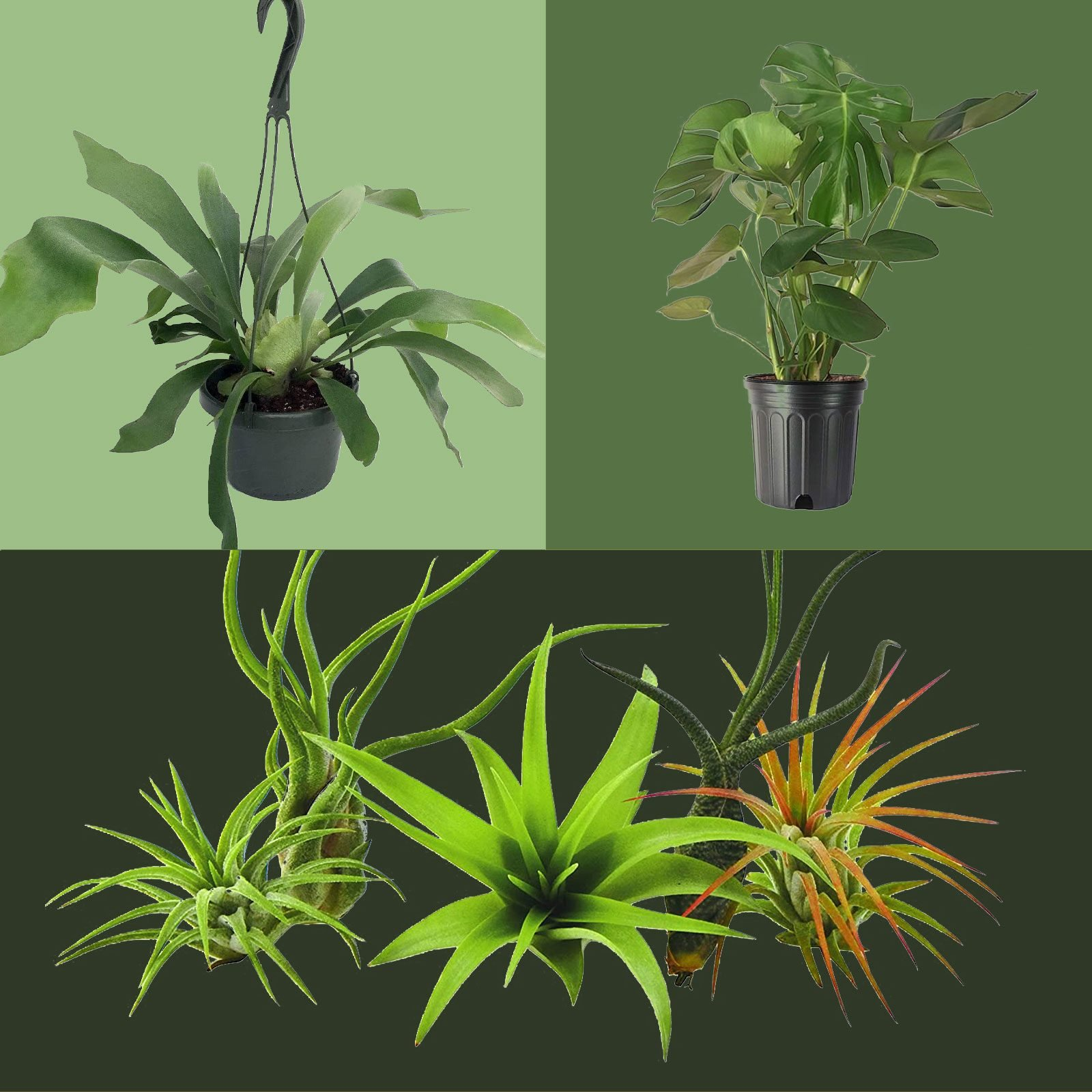 Three plants that thrive in houses with low amounts of light