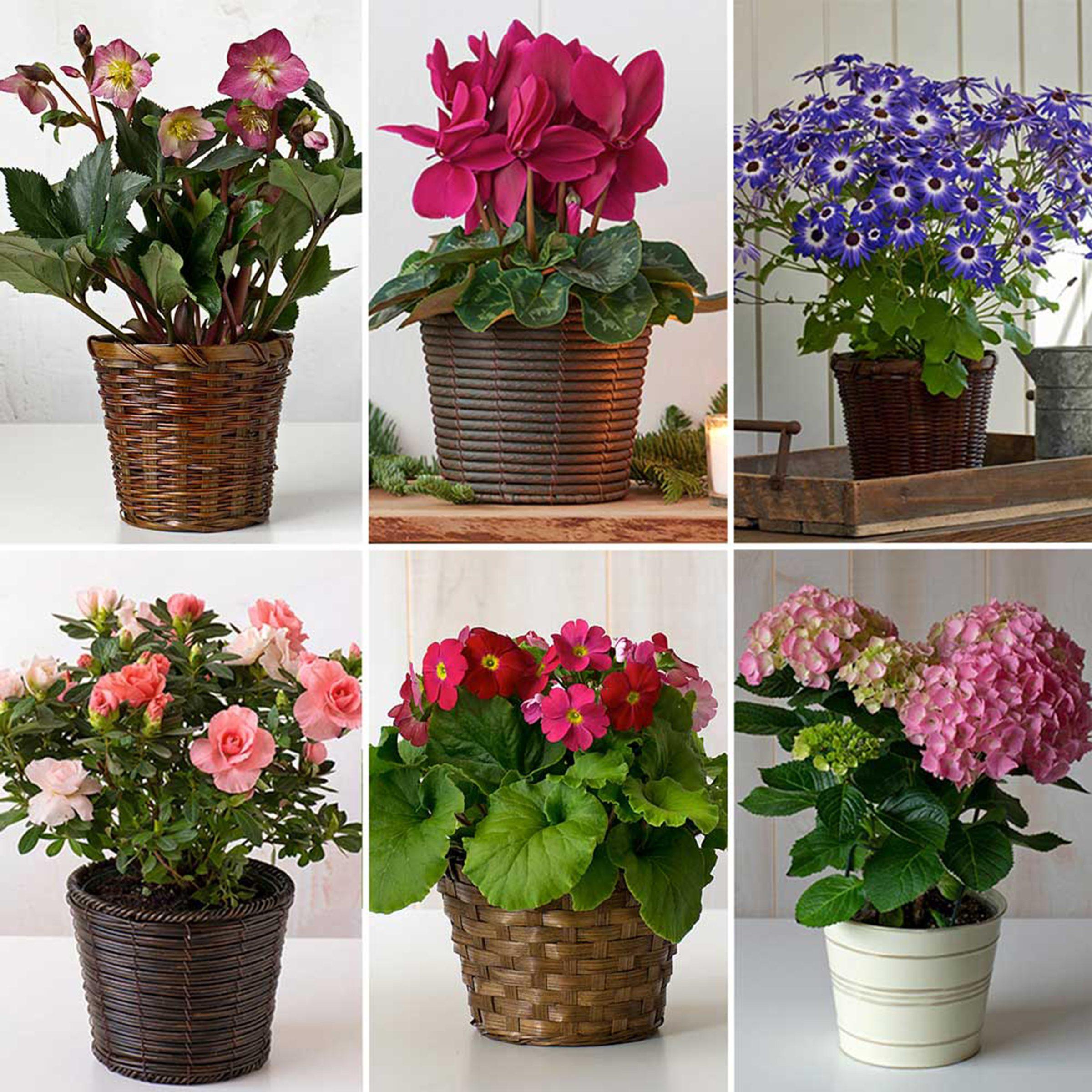 Flowering houseplants (6)