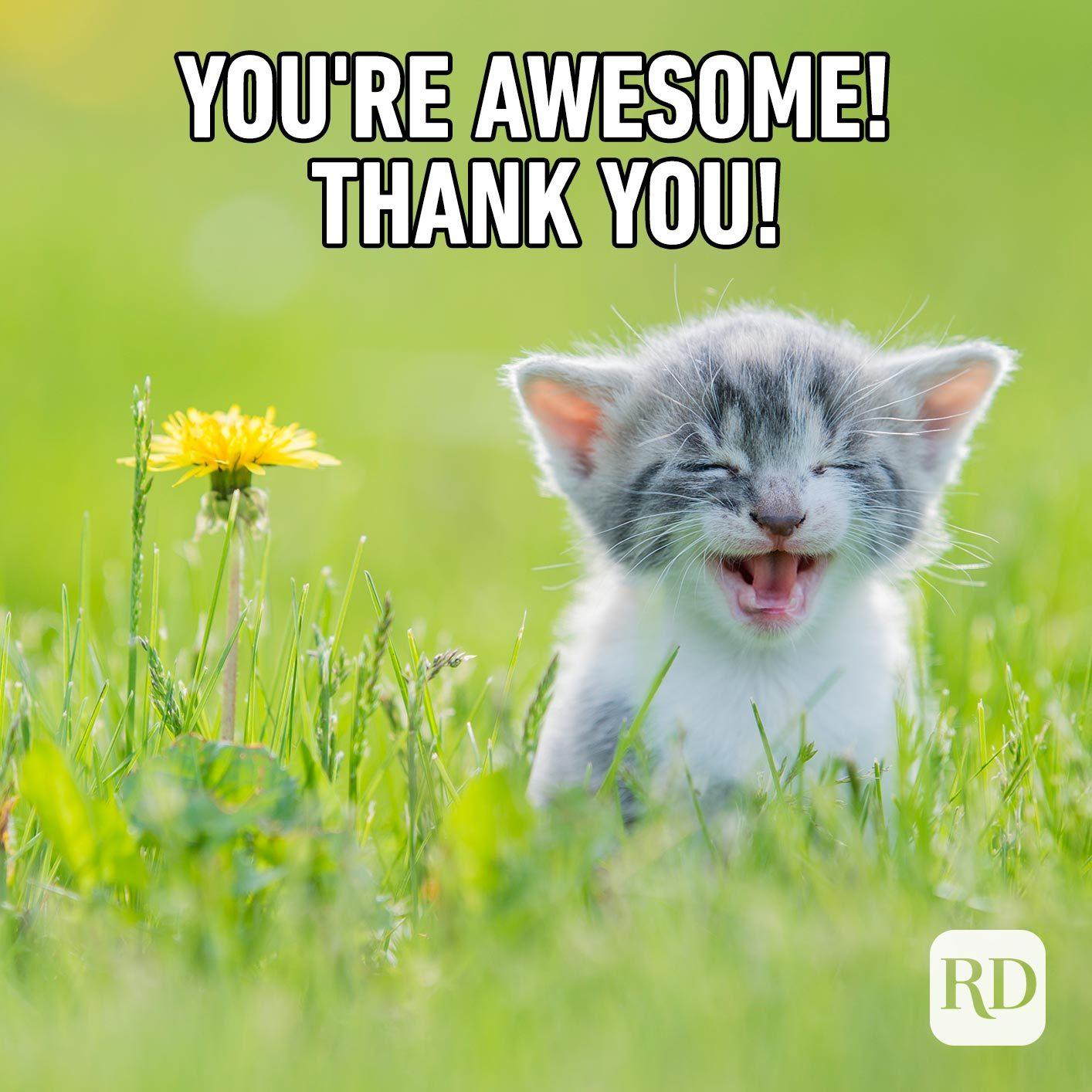 Kitten in garden. Meme text: Thank you!