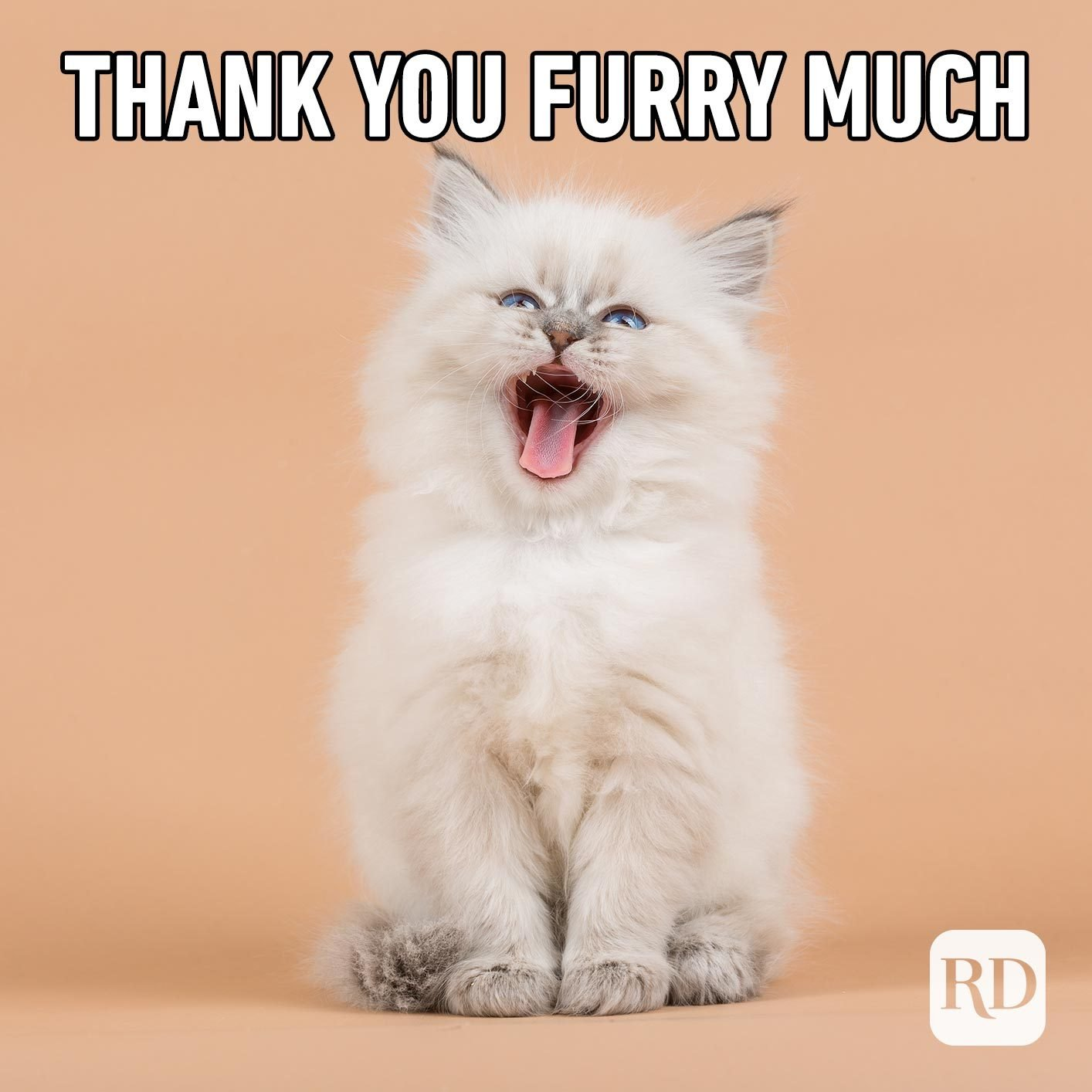 Cat screaming. Meme text: thank you furry much