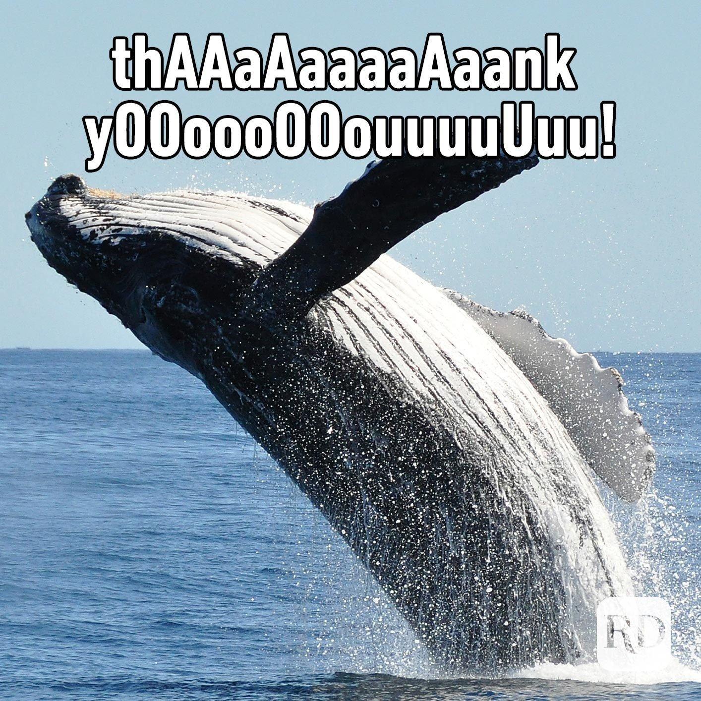 Whale. Meme text: thAAaAaaaaAaank yOOoooOOouuuuUuu!
