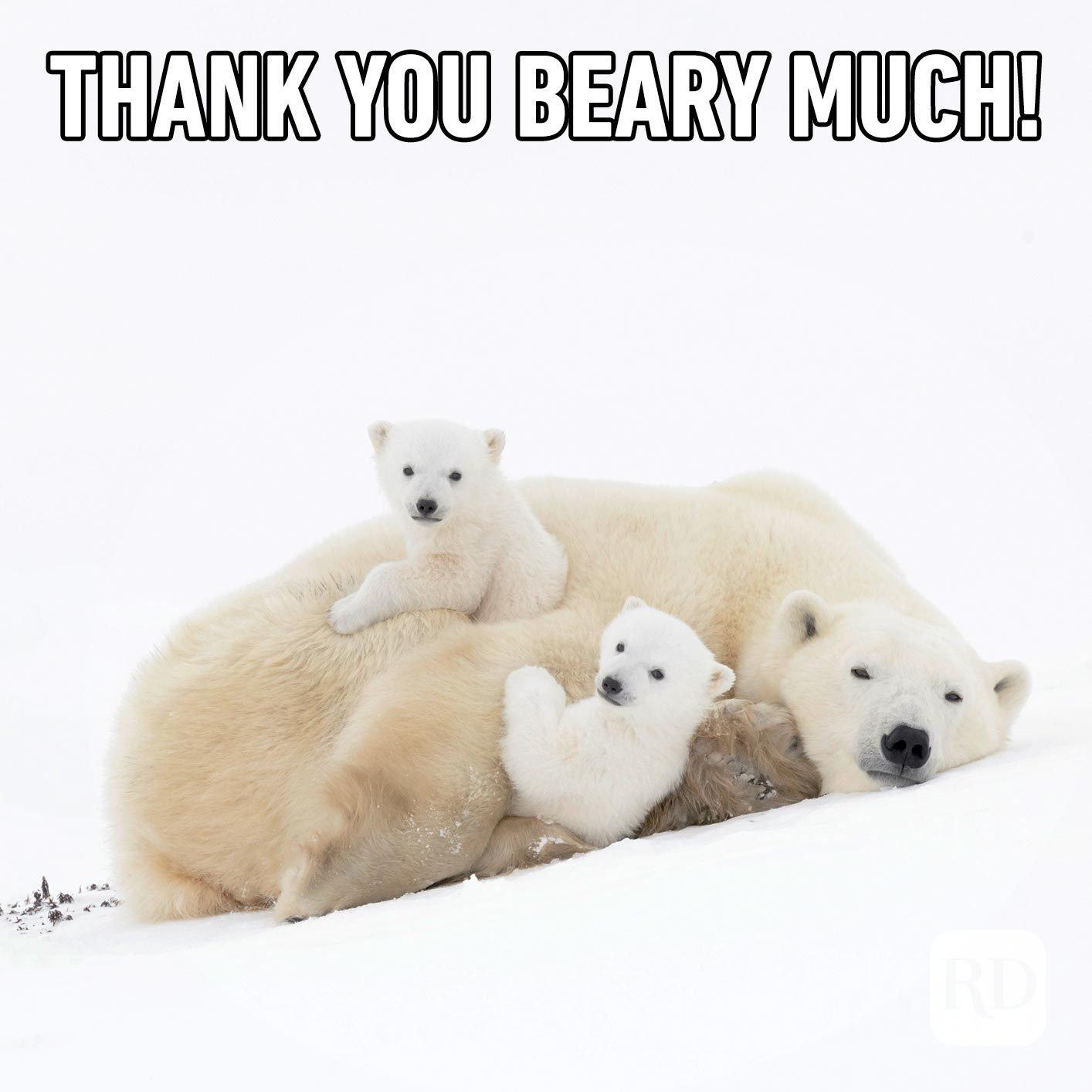 Polar bear family. Meme text: Thank you beary much!