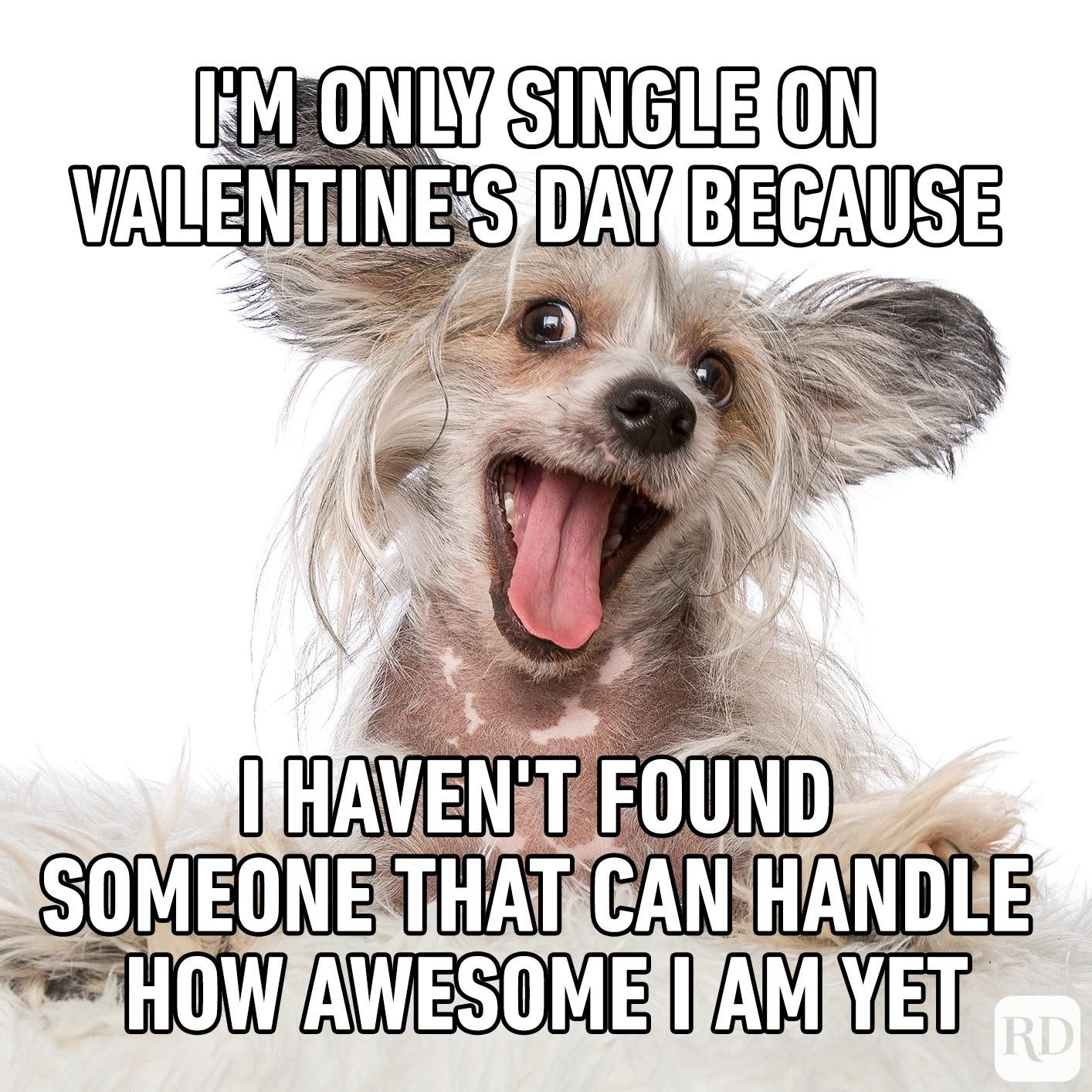 Dog looking crazy. Meme text: I'm only single on Valentine's Day because I haven't found someone that can handle how awesome I am yet.
