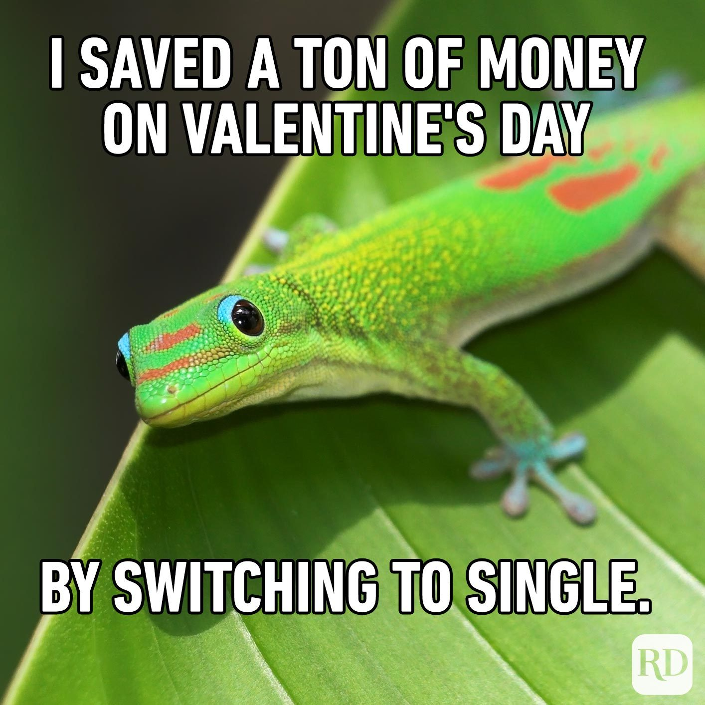 Gecko on leaf. Meme text: I saved a ton of money on Valentine's Day by switching to single.