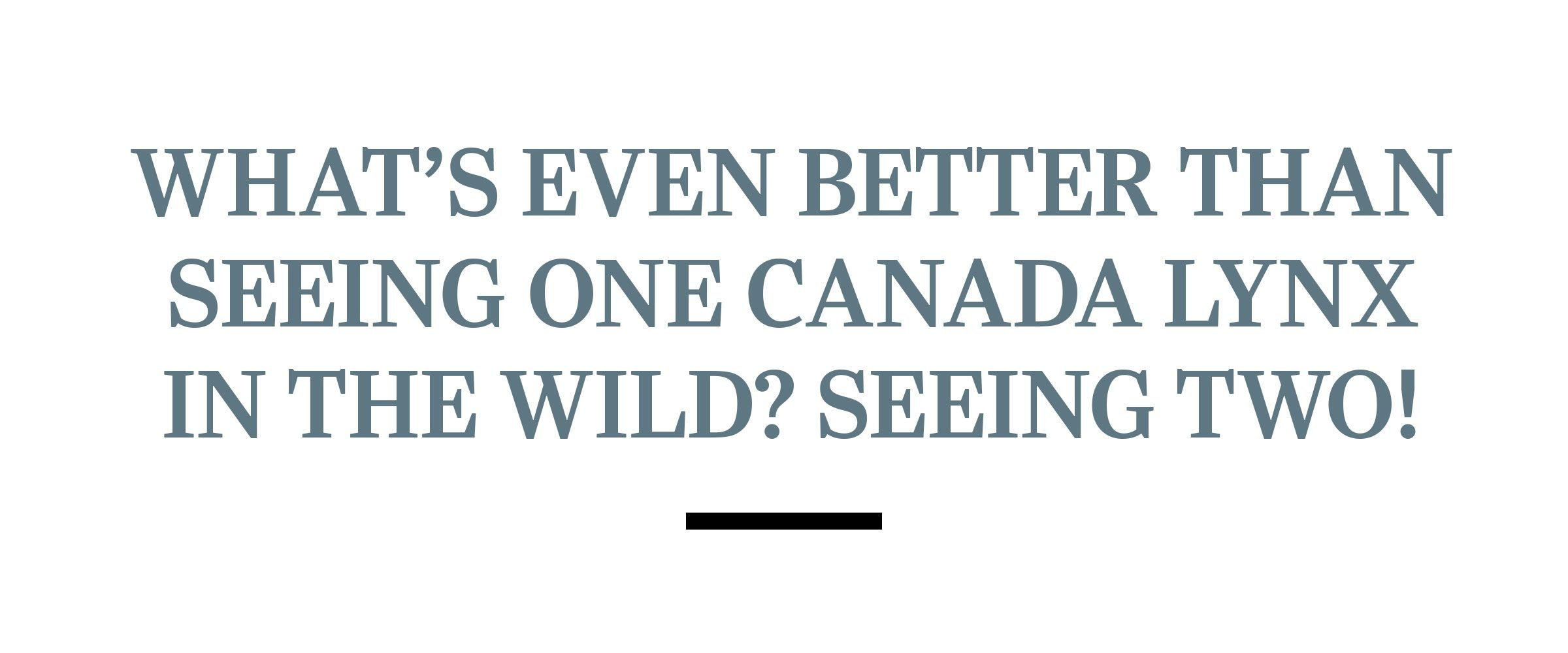 text: What's even better than seeing one Canada lynx in the wild? Seeing two!