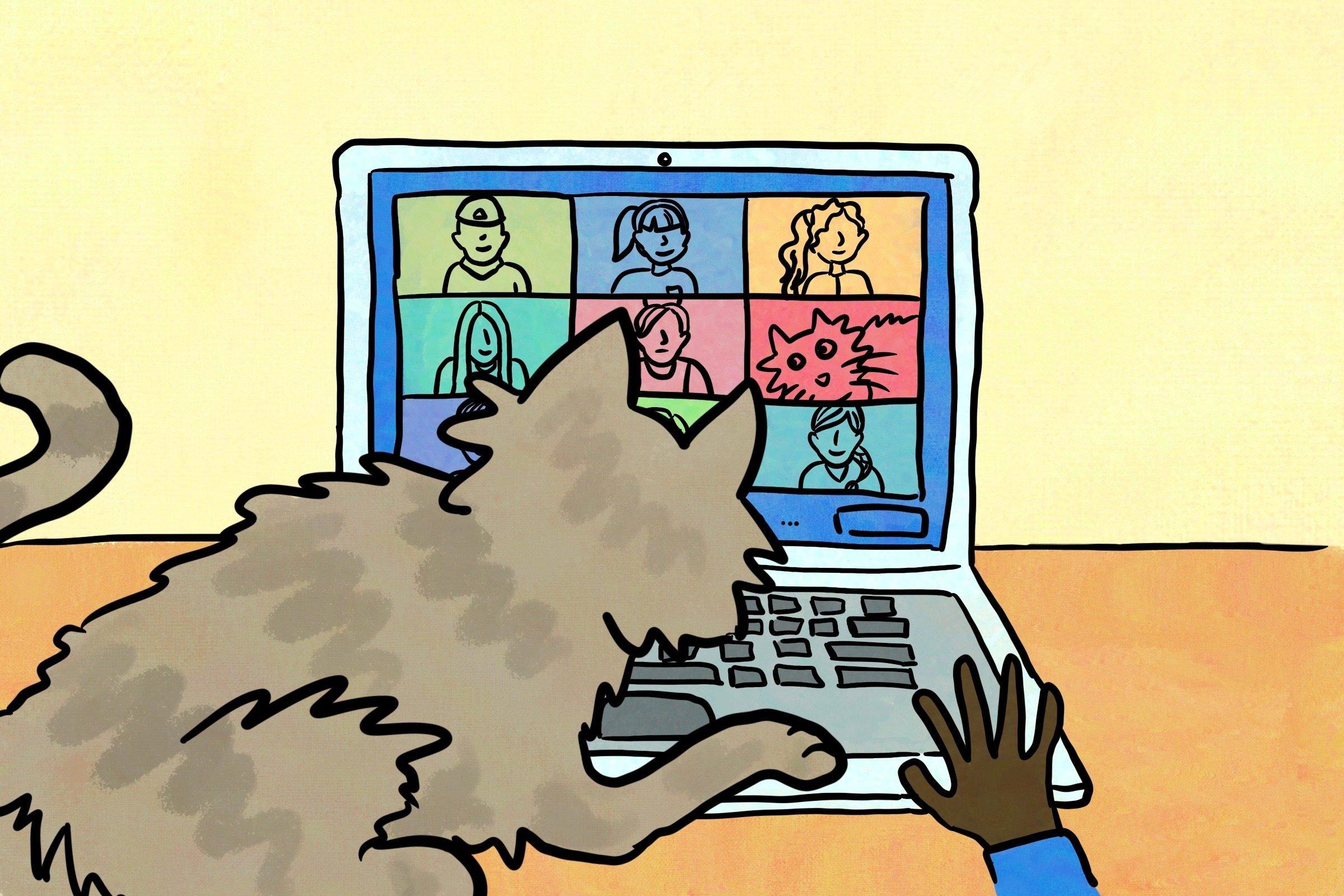 Cat on laptop.