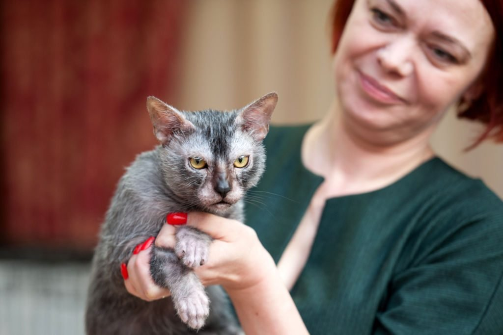 "Cat show ""The Magic of Cats"" in Tomsk, Russia"