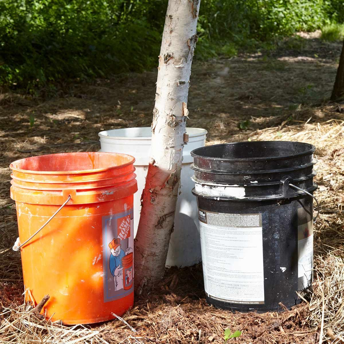 buckets under trees filling with water