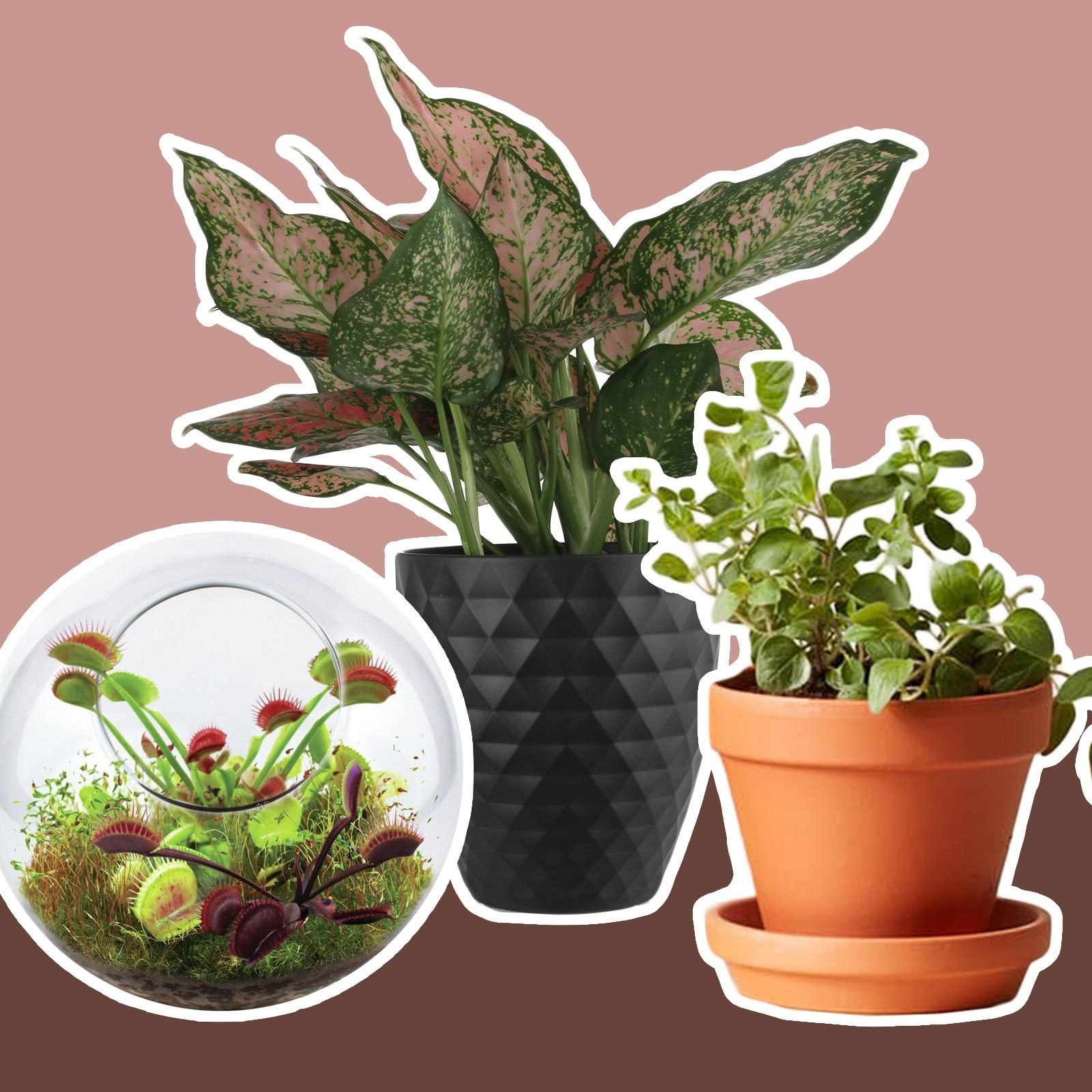 Plants for any size space