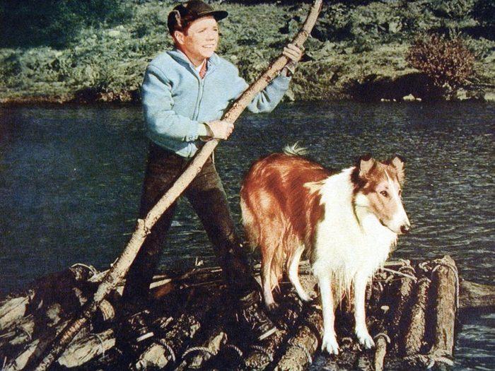 Lassies Groesstes Abenteuer, 1960Er, 1960S, Collie, Film, Hund, Lassie, Lassie'S Great Adventure, Boy And Dog, Dog