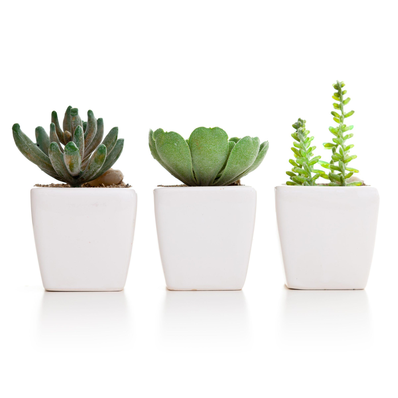 Miniature succulents in three pots