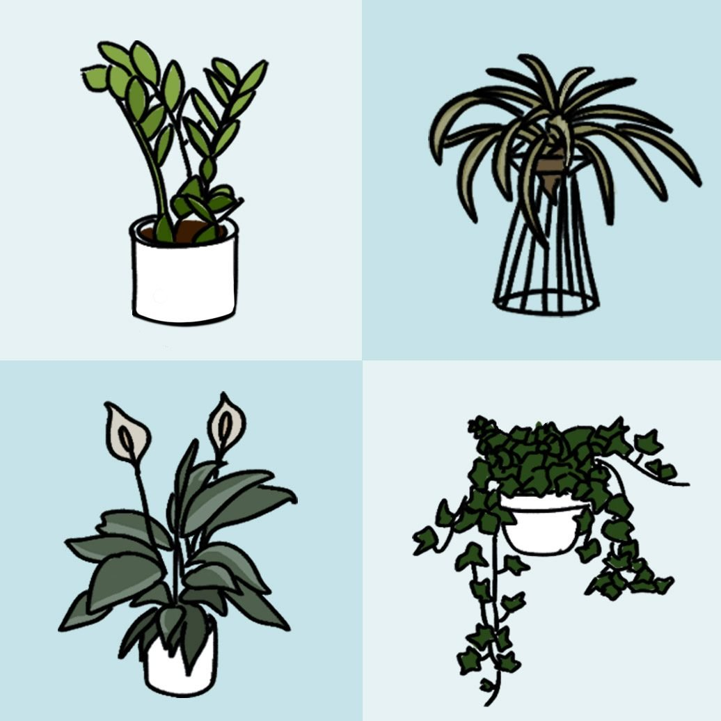 Four plant doodles on alternating shades of blue