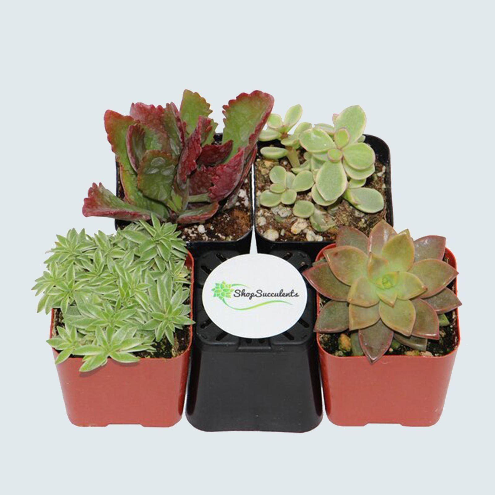microplants, or succulents