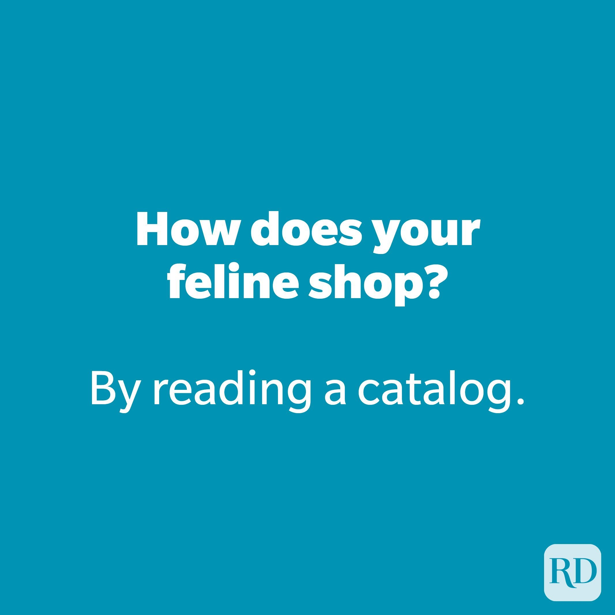 How does your feline shop?