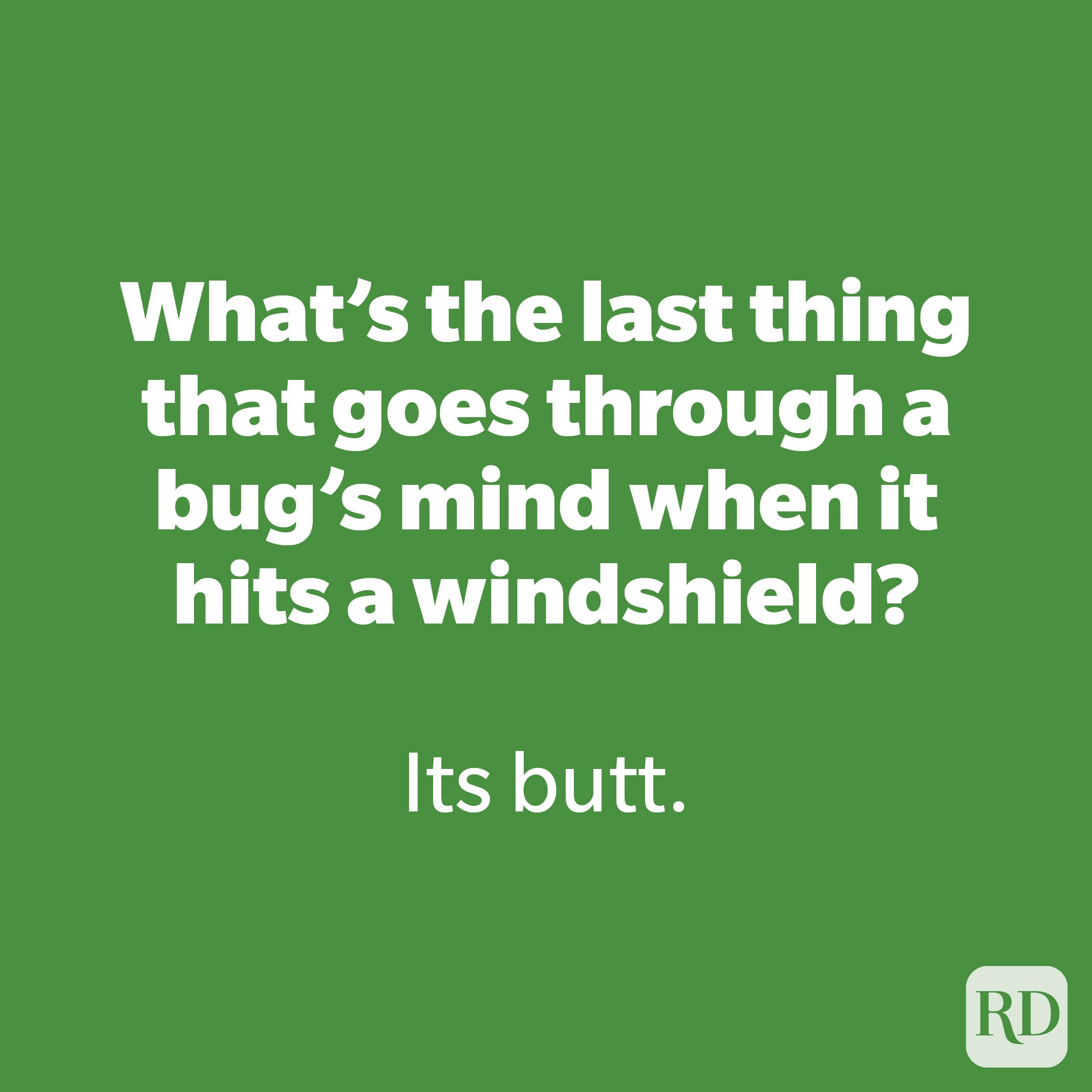 What's the last thing that goes through a bug's mind when it hits a windshield?