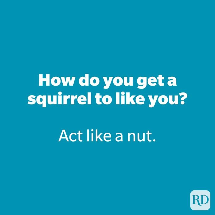 How do you get a squirrel to like you?