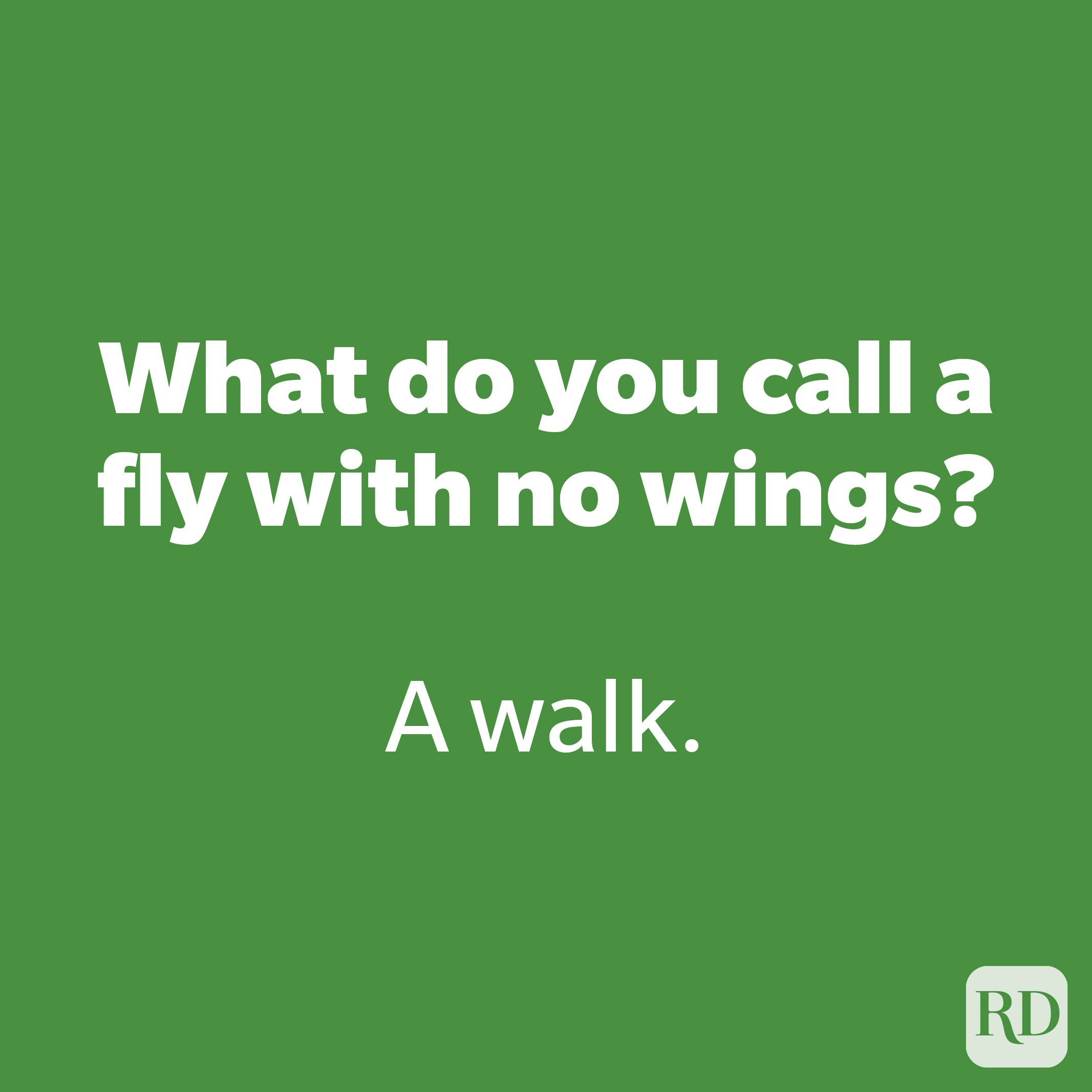 What do you call a fly with no wings?