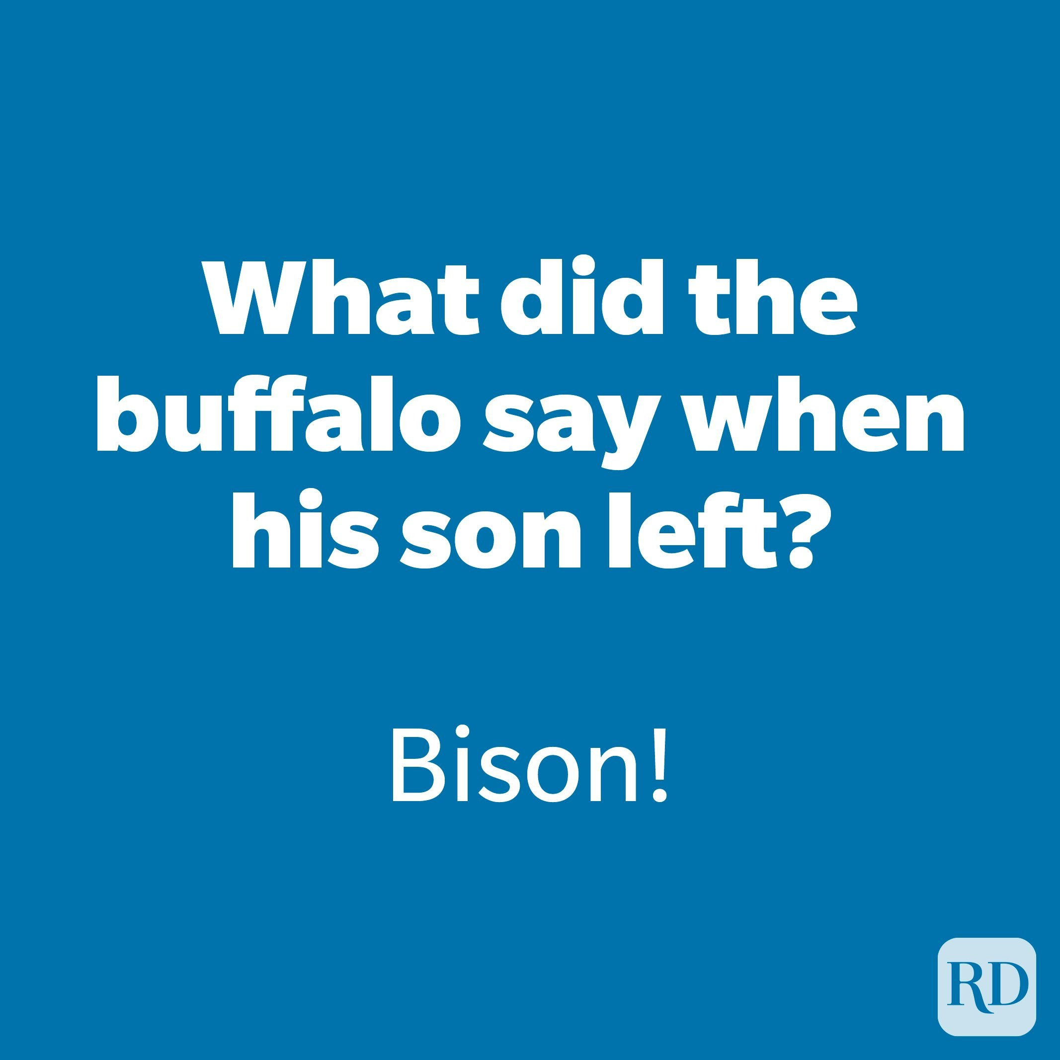 What did the buffalo say when his son left?