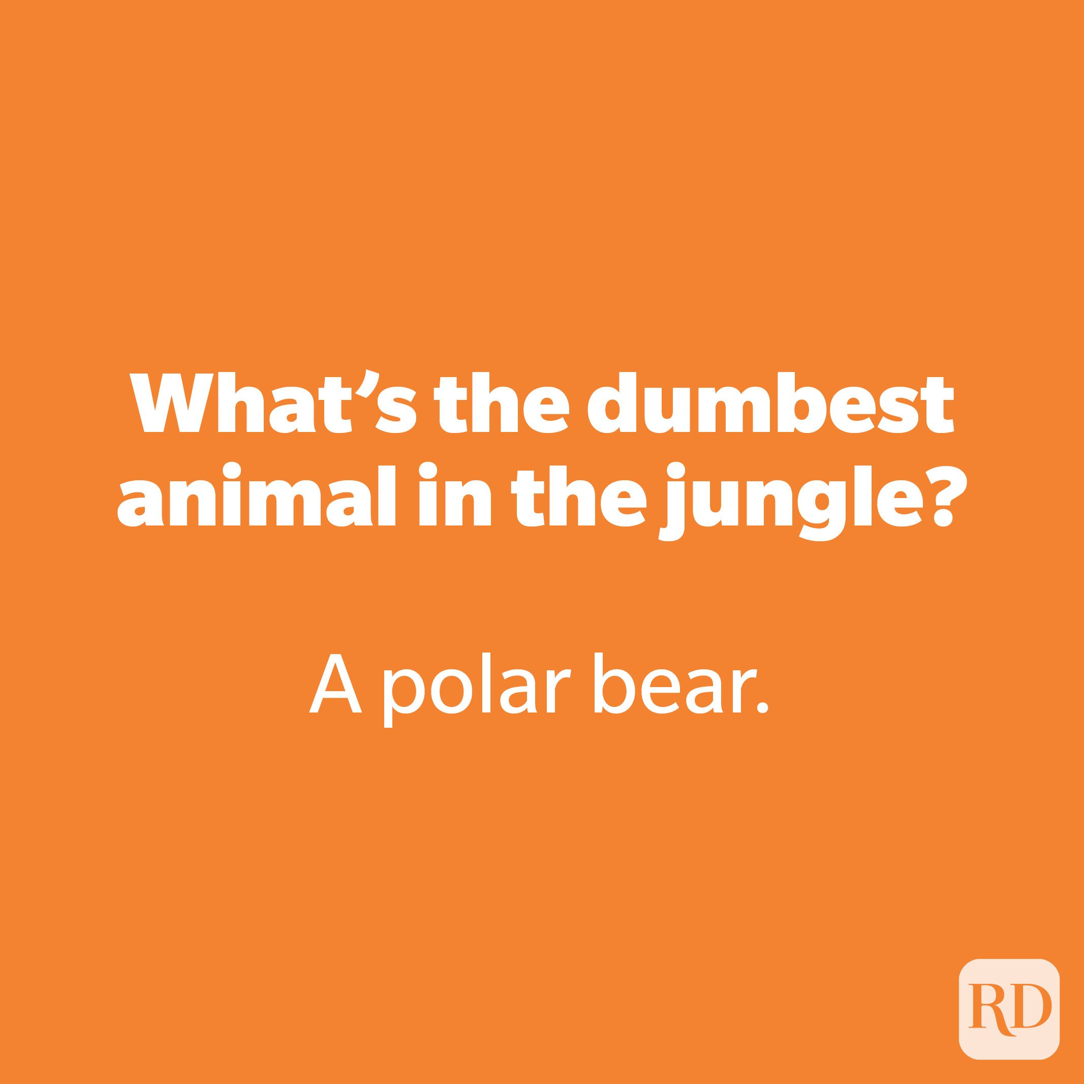 What's the dumbest animal in the jungle?