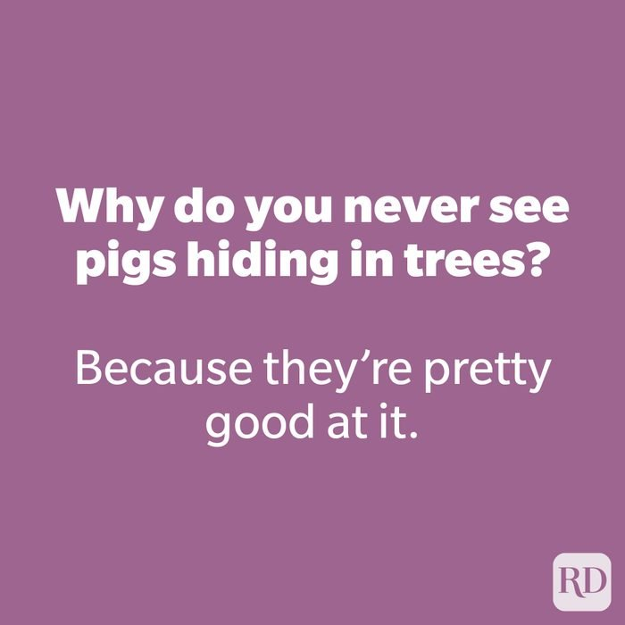 Why do you never see pigs hiding in trees?