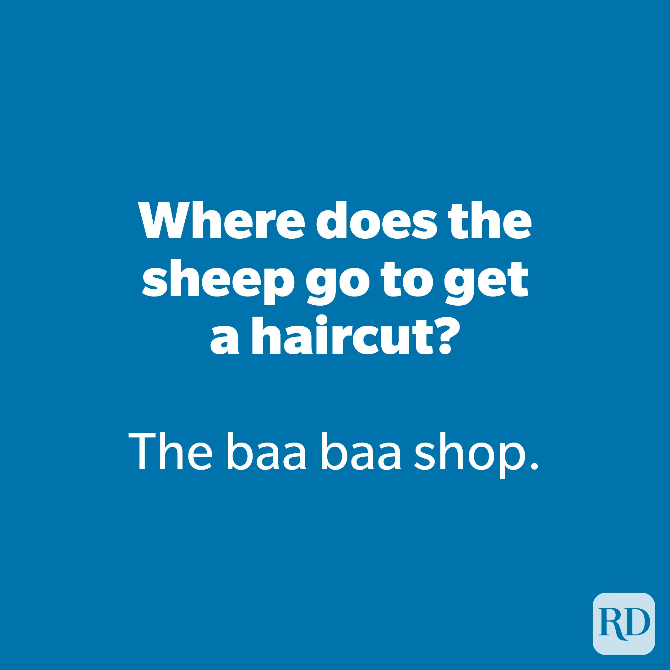 Where does the sheep go to get ahaircut?