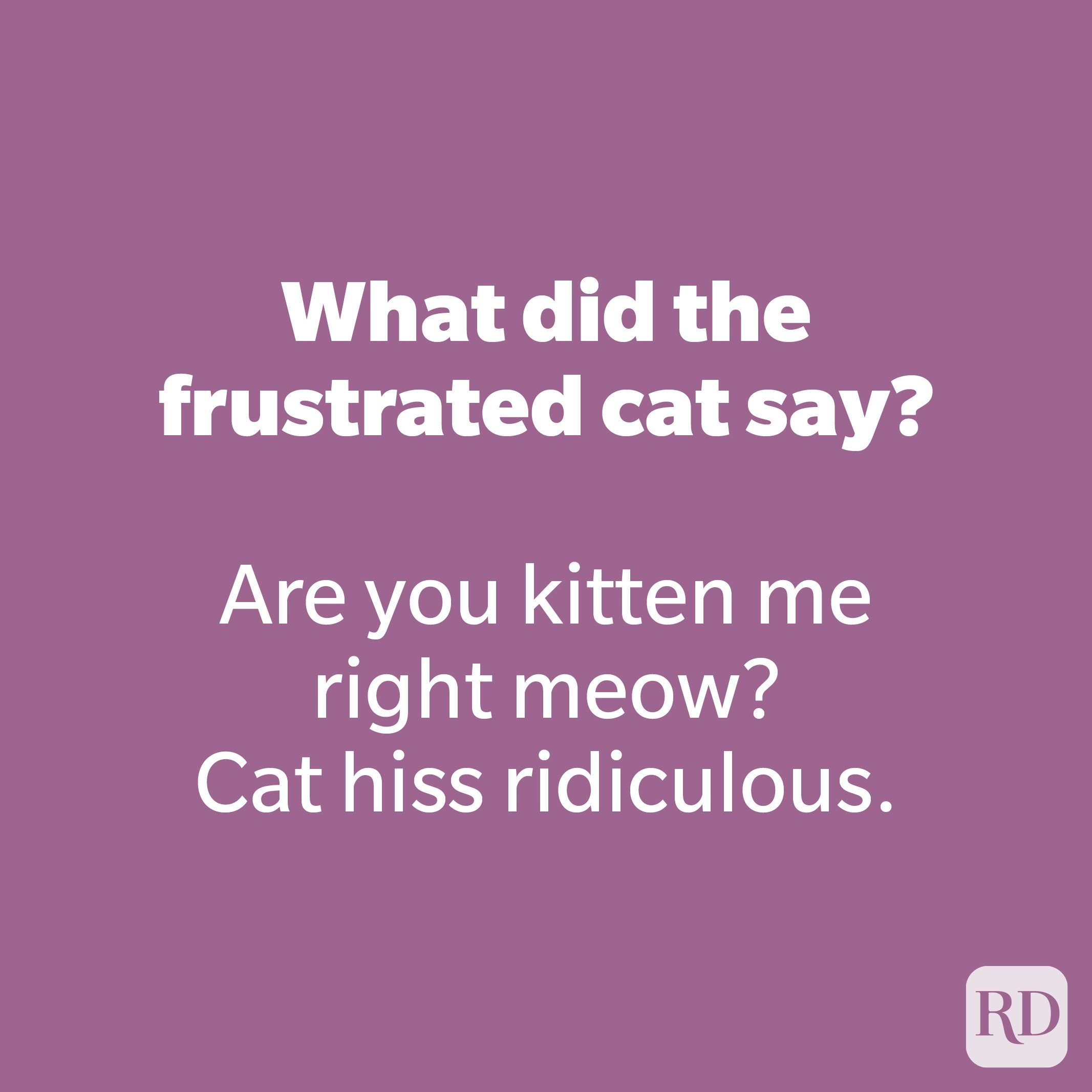 What did the frustrated cat say?
