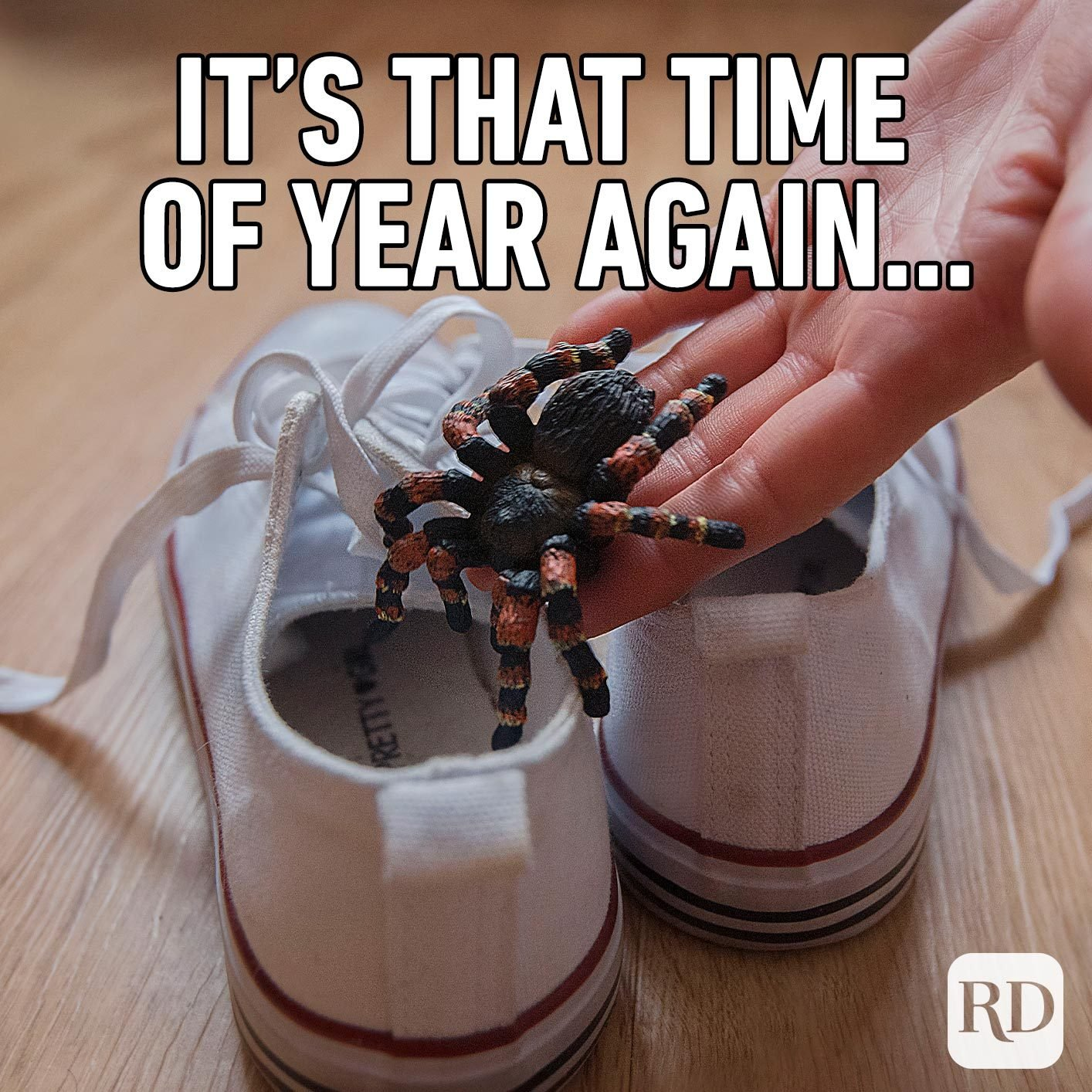 Person slipping a spider into shoes. Meme text: It's that time of year again...