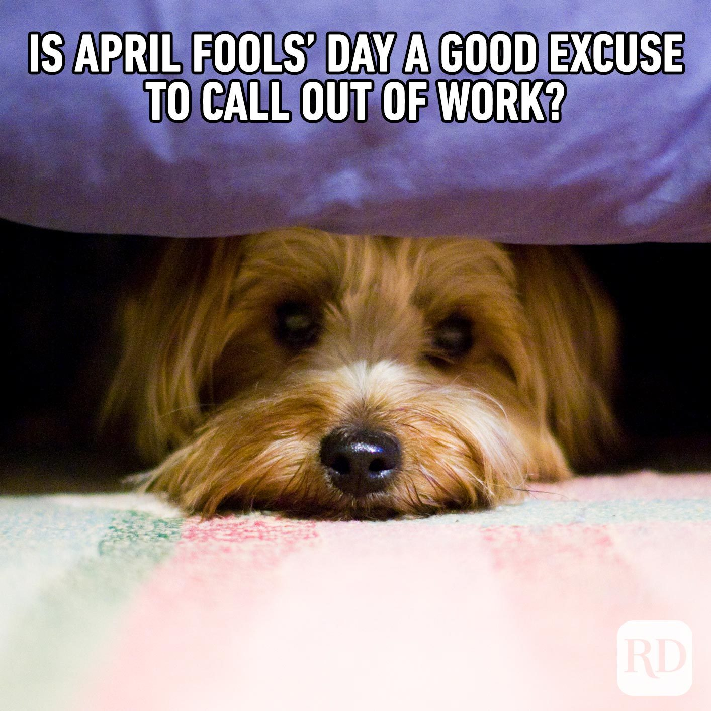 Dog hiding under a bed. Meme text: Is April Fools' day a good excuse to call out of work?