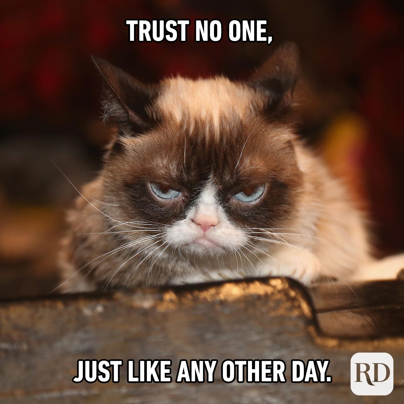 Grumpy cat. Meme text: Trust no one, just like any other day.