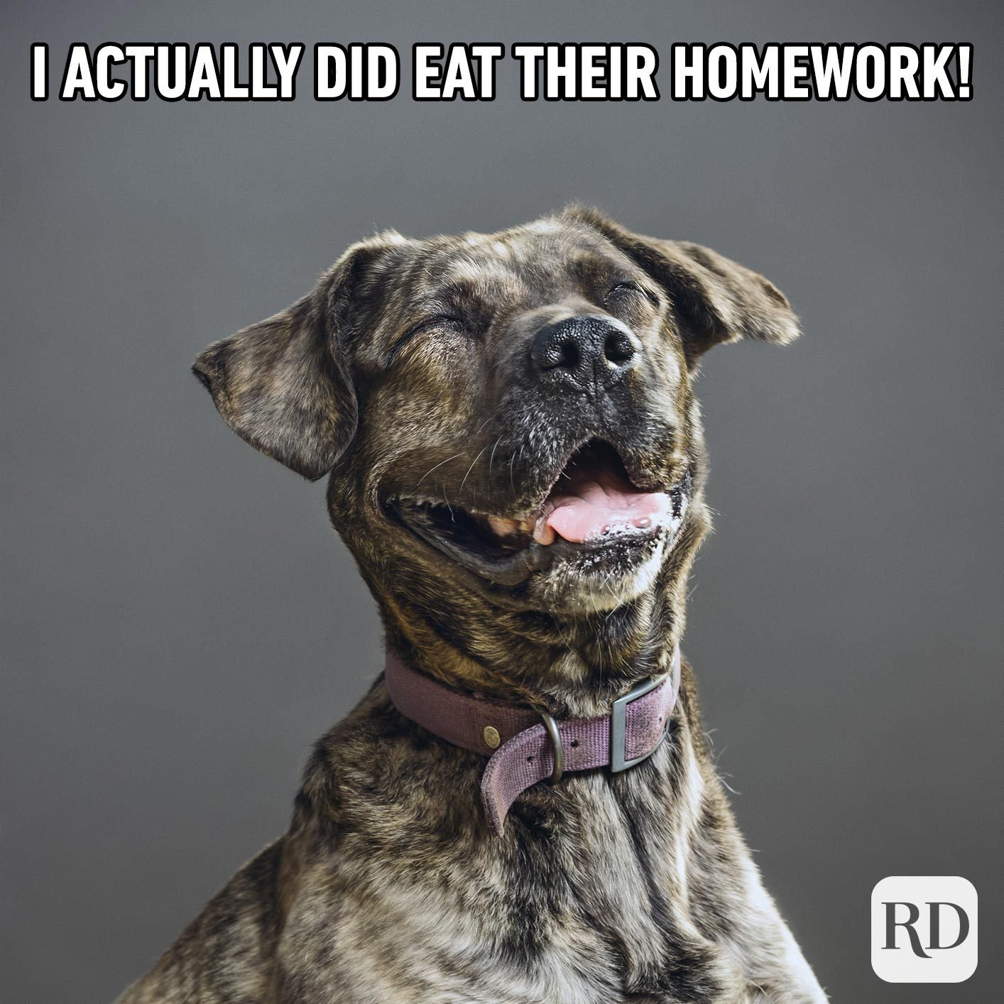 Dog laughing. Meme text: I actually did eat their homework!