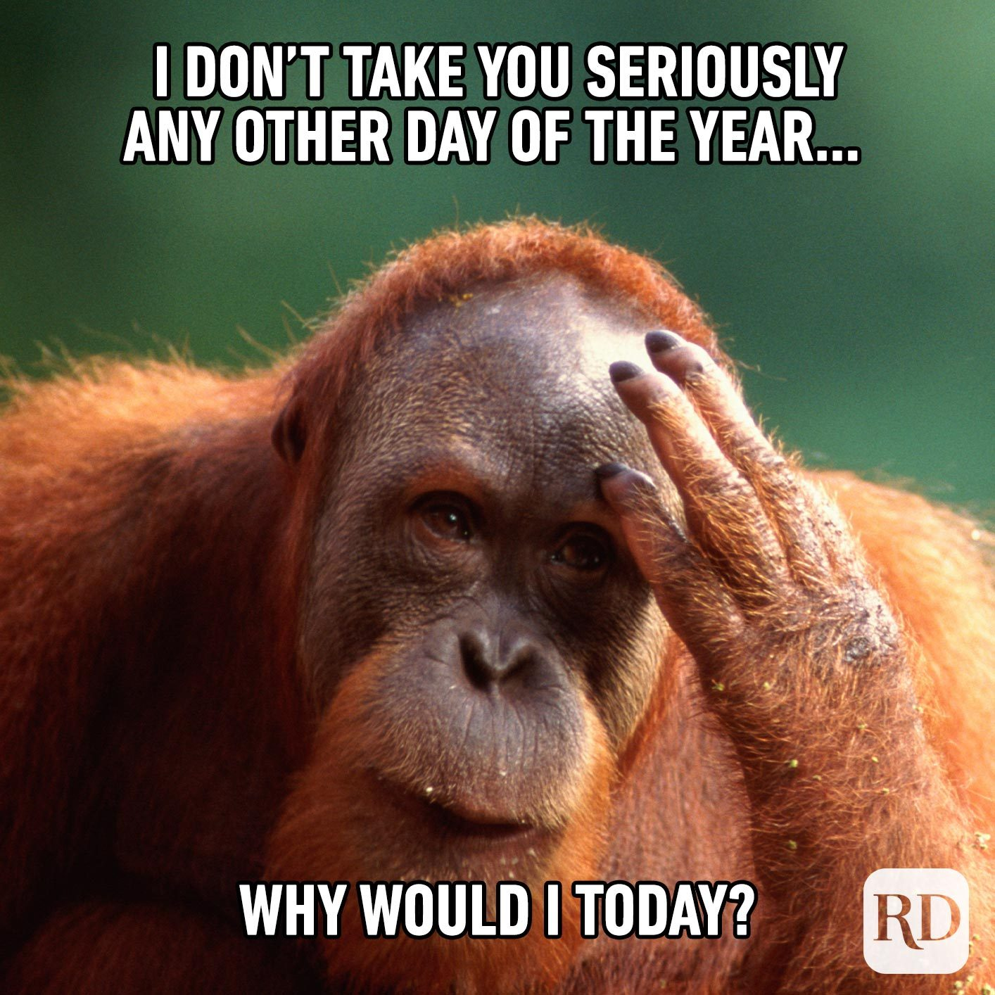 Orangutan rubbing forehead. Meme text: I don't take you seriously any other day of the year… why would I today?