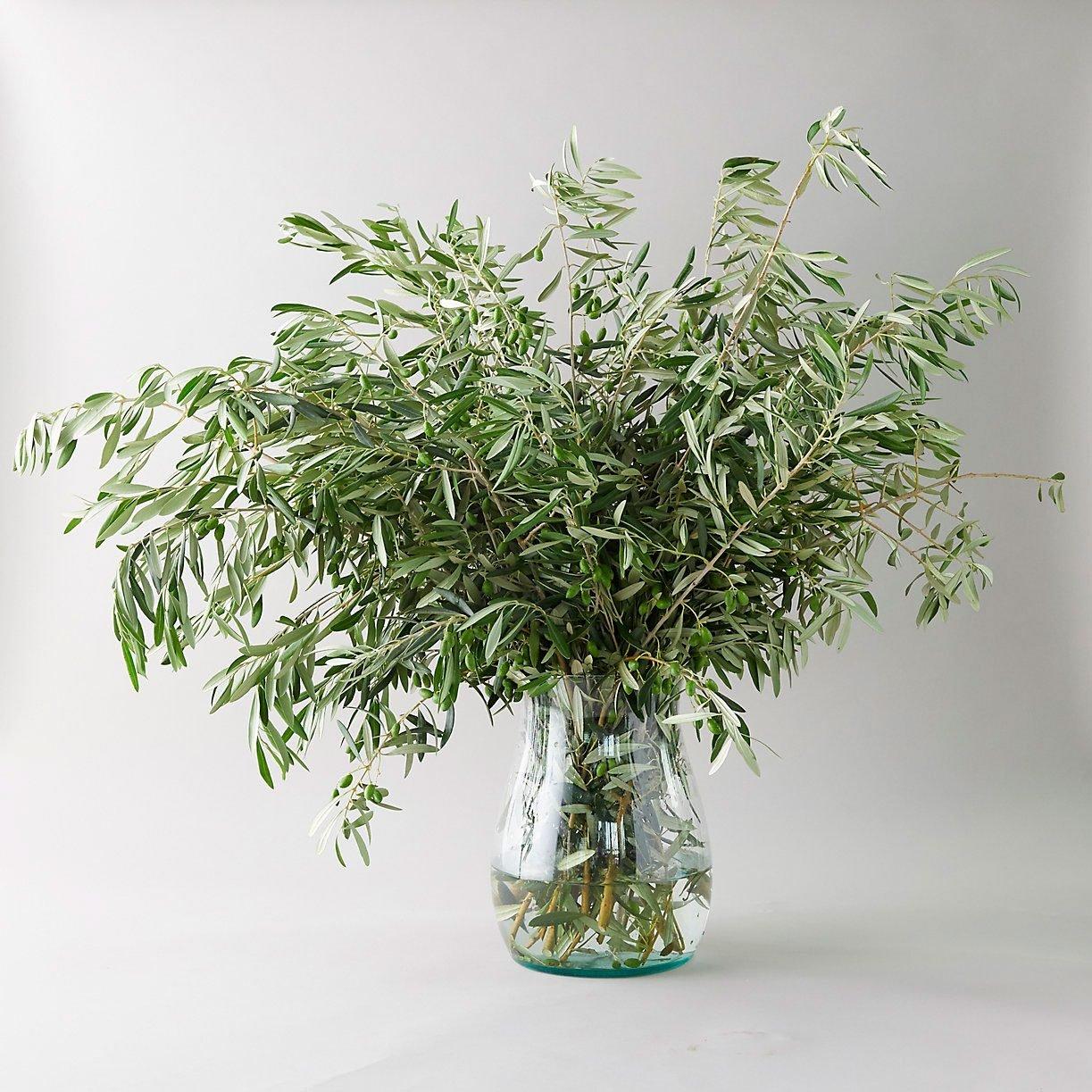 Fresh Olive Branch Bunch