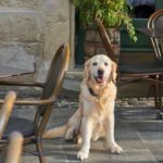 Dining Out with Your Dog: 15 Etiquette Tips to Always Follow