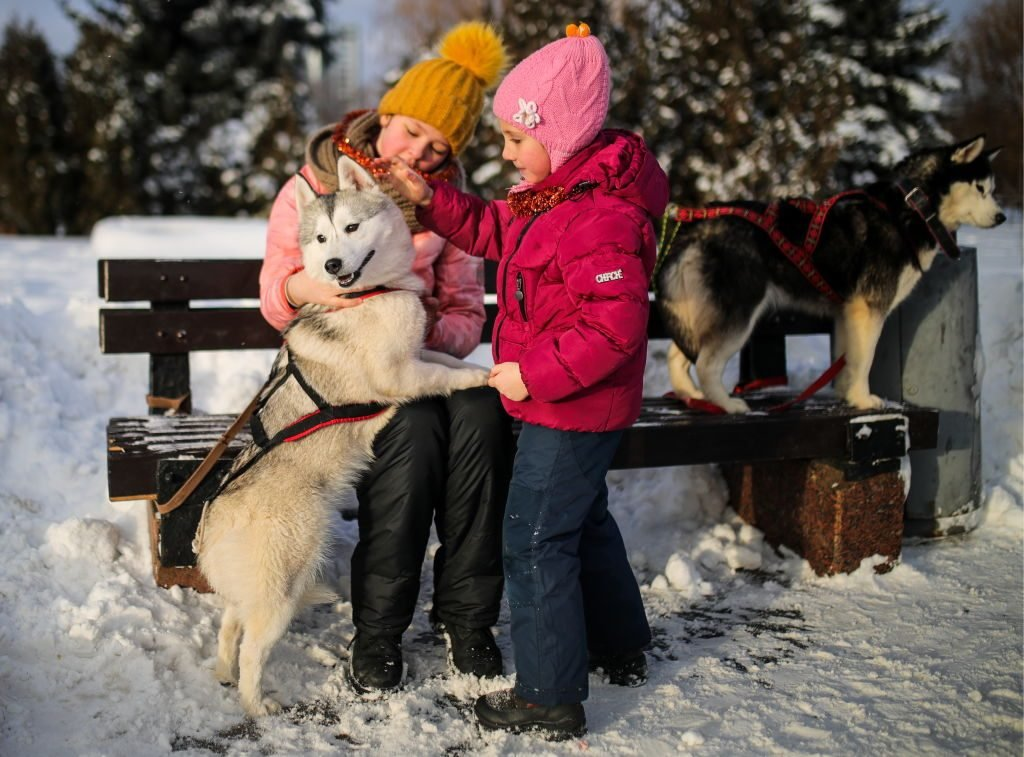 Winter leisure in Moscow's Victory Park