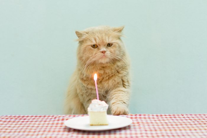 Cat about to bllow a candle