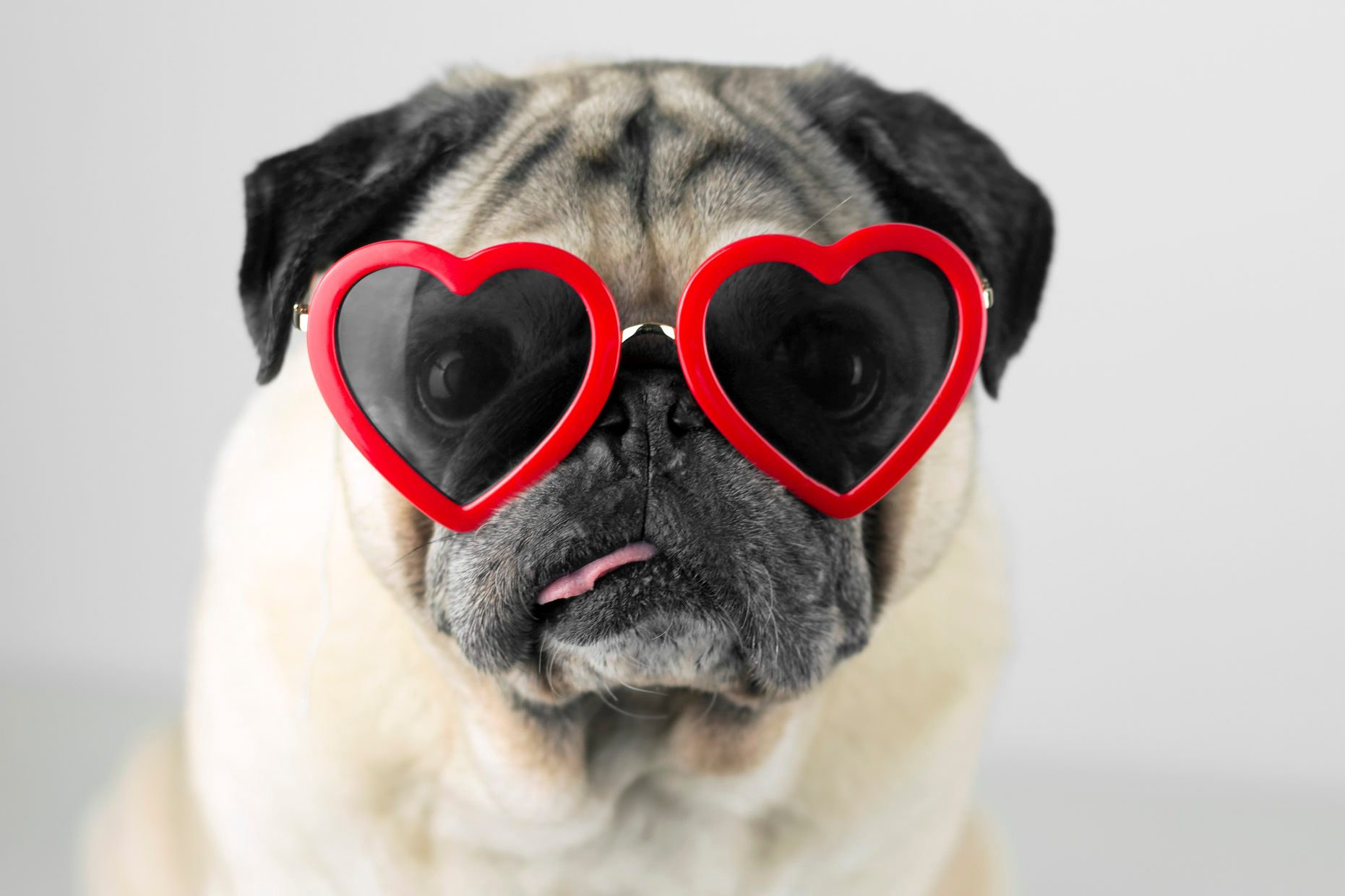 Dog with glasses of red heart